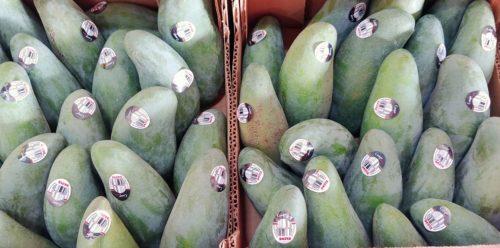 Thai Green Mangos cropped
