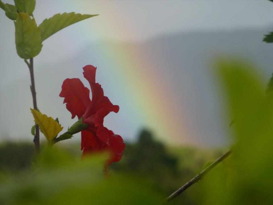 Flower and rainbow