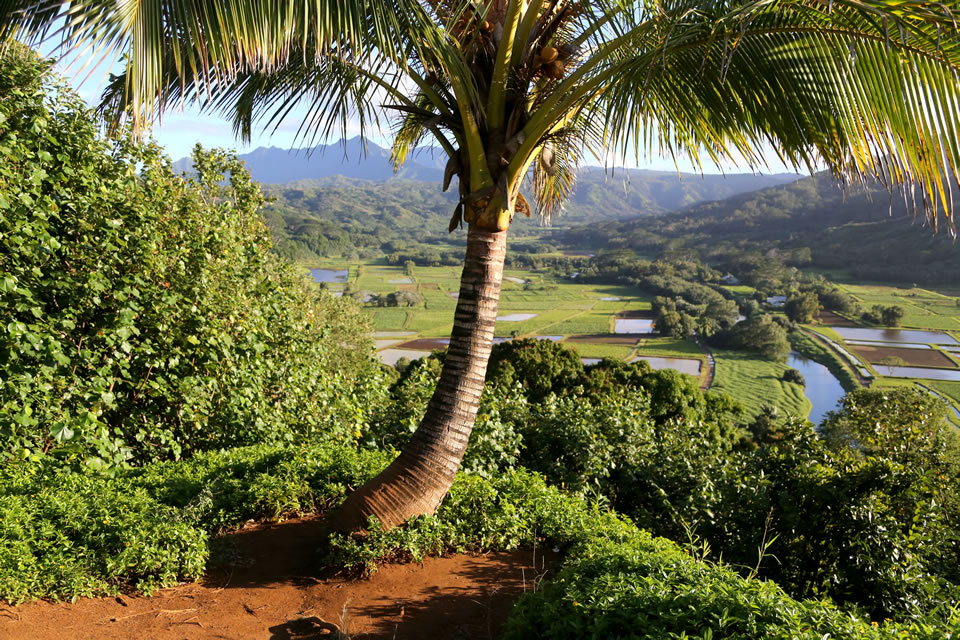 View of Hanalei valley