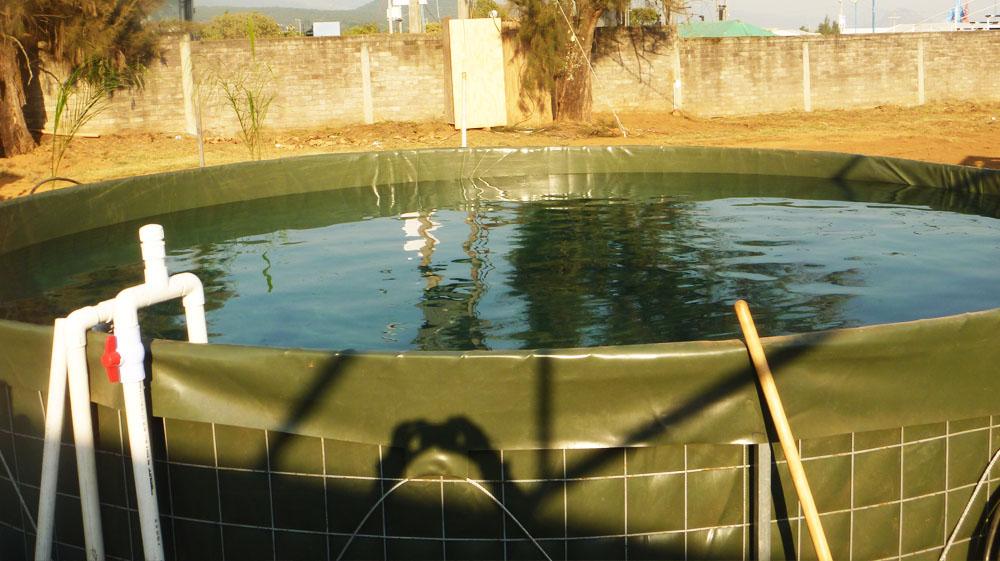 estanques de peces