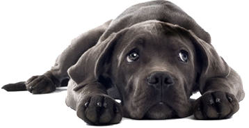puppy