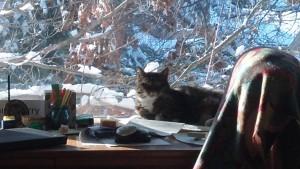 Otis the Cat