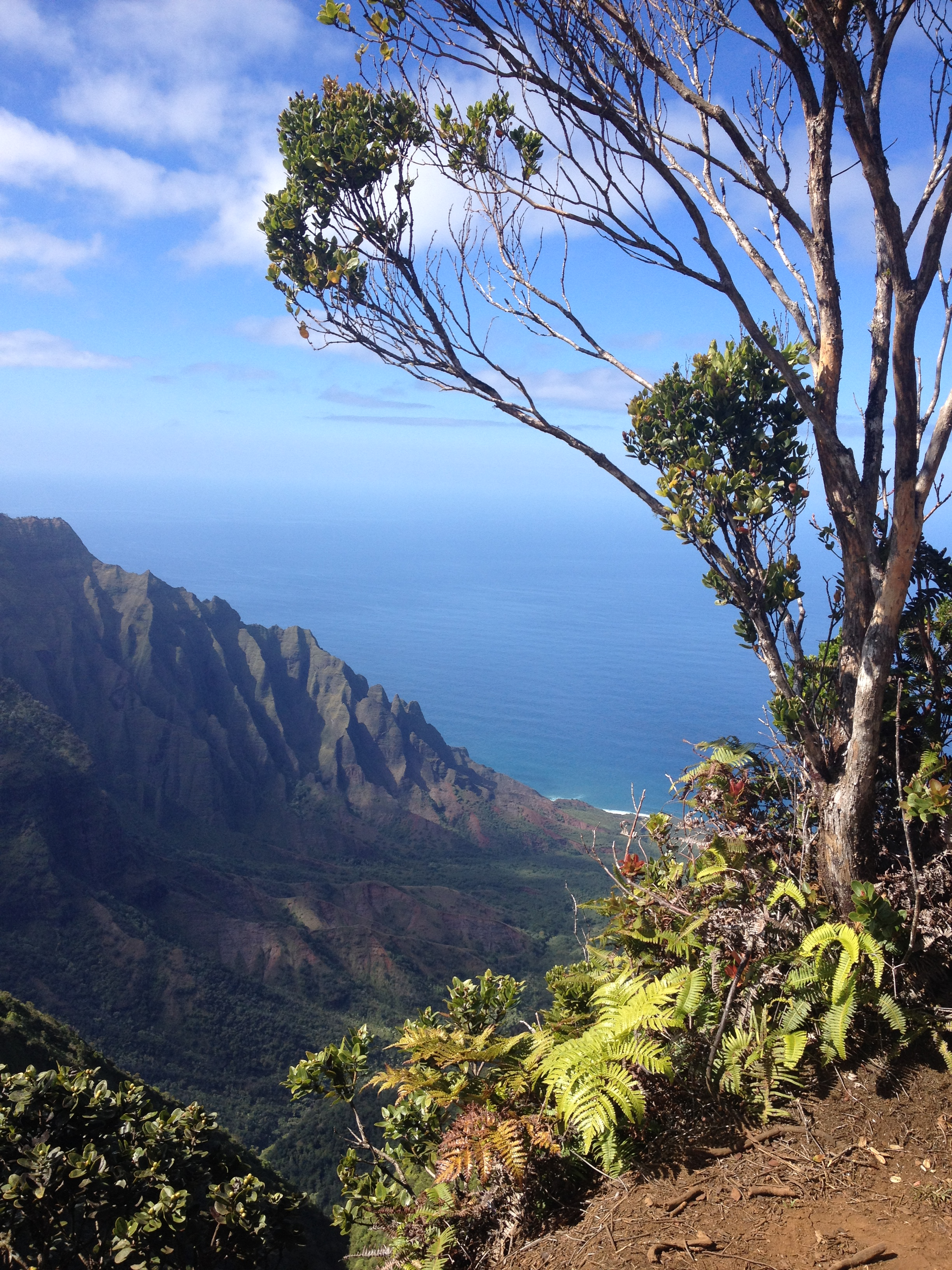 Kauai/Hawaii is always a good idea…