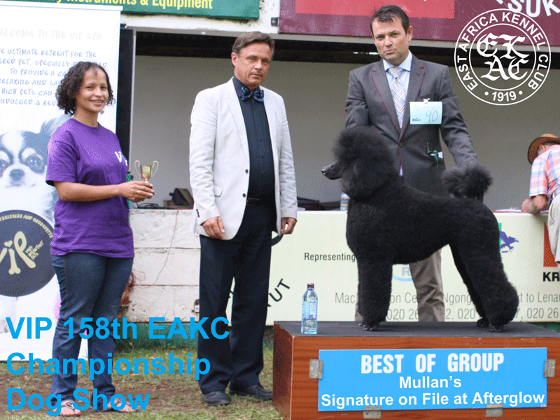 Best of Utility Group at the 158th EAKC Championship Dog Show