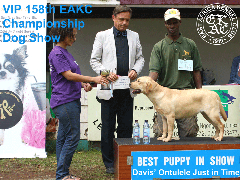 Best Puppy in Show at the 158th EAKC Championship Dog Show