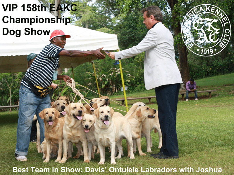 Best Team in show at the 158th EAKC Championship Dog Show