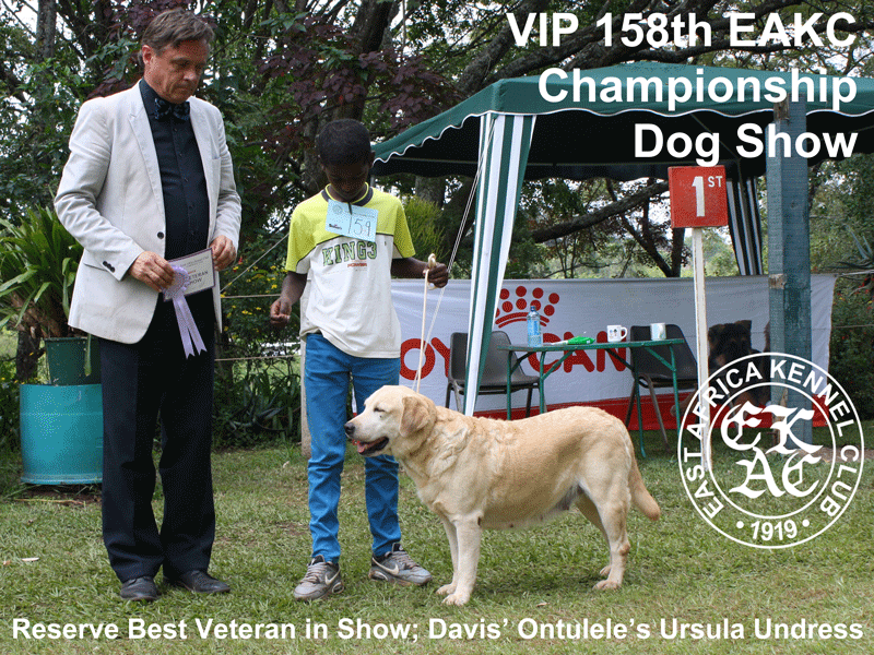 Reserve Best Veteran In Show at the 158th EAKC Championship Dog Show