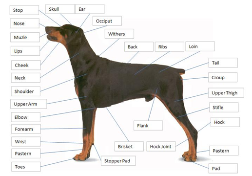 points of a dog 2