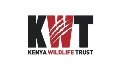 Photo of Internship Opportunity At Kenya Wildlife Trust
