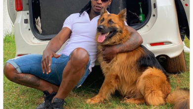 Photo of 10 Cutest Kenyan Celebrity Pets