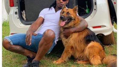 Photo of 10 Cutest Kenyan Celebrity Pets