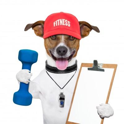 Pet Fitness Programs