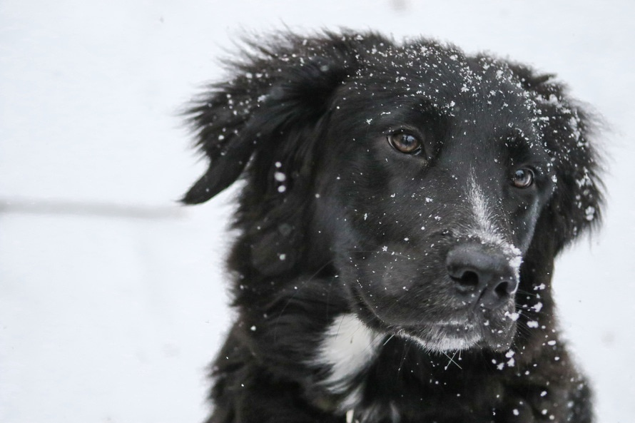 6 Products to Help Keep your Pets Warm