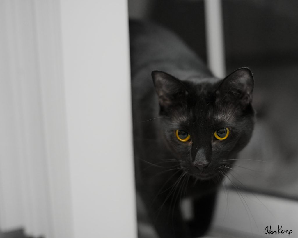 It may be a bit gimmicky, but this seems to be the only way I can get a decent shot of Virgil. It's difficult to get a good exposure of an all black cat.