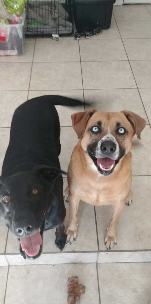 Bonded Mixed Dogs Named Ivy and Lola