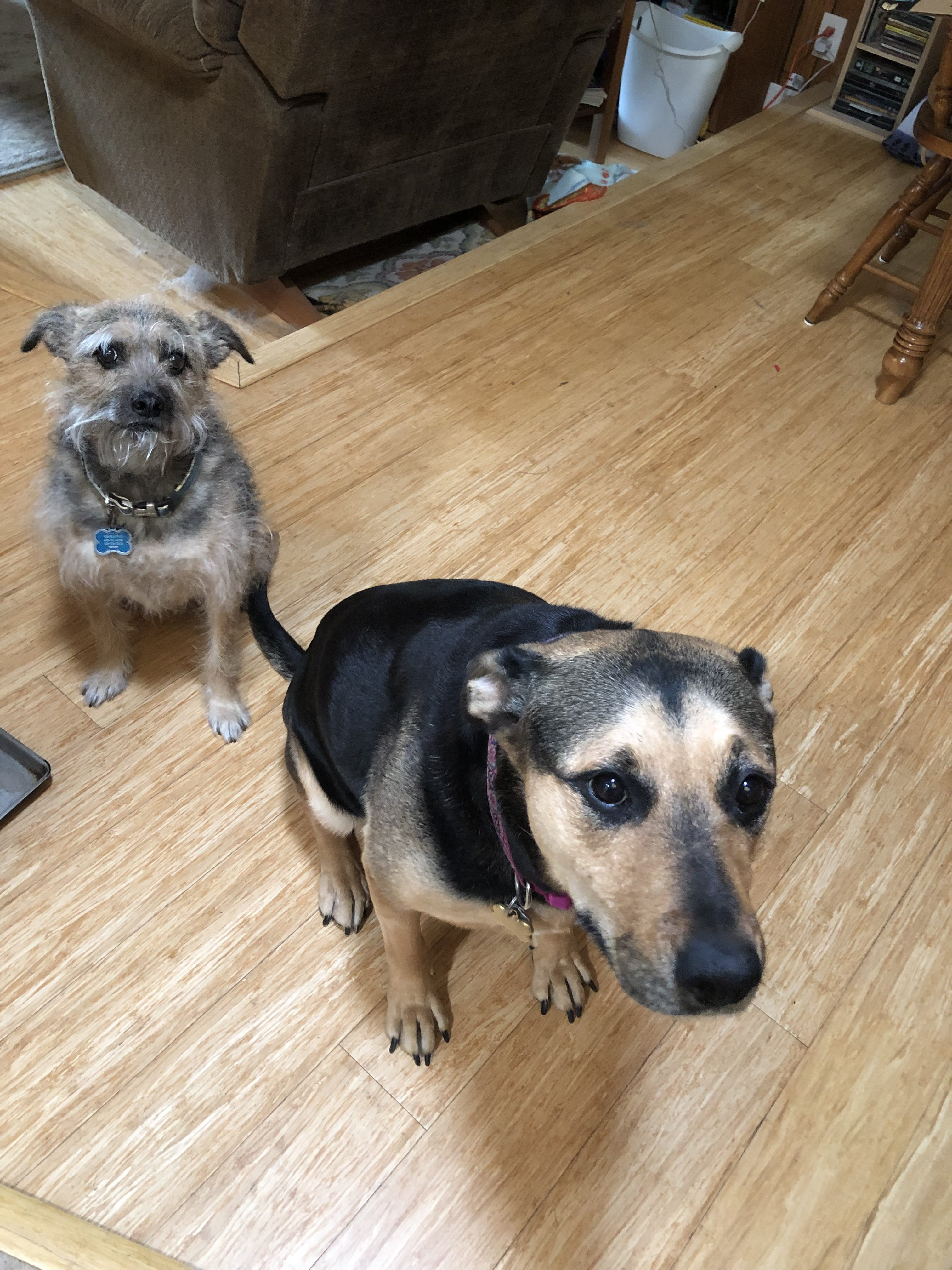 Sibling Pair Named Stella & Rynn