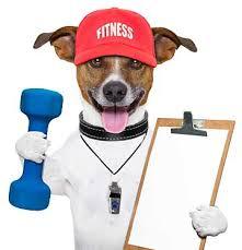 Pet Fintness Classes