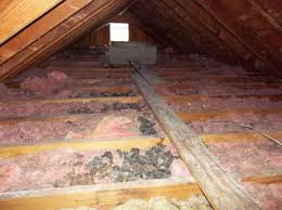 attic 1 serviced and cleaned by Pro Trap Animal Removal & Pest Control in Southwestern Ontario