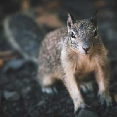 grey-squirrel-removal-inner-page-image-400x400