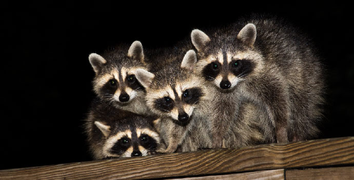 When-Should-I-Call-For-Wildlife-Removal-Services