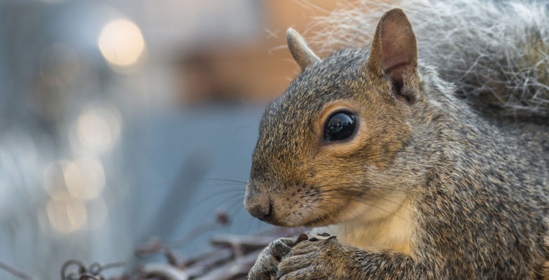 squirrel-in-windsor-essex-county-and-chatham-kent