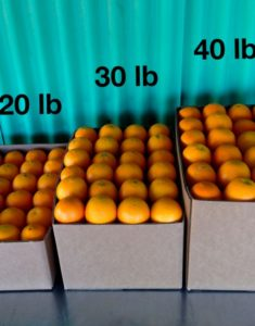 Buy AZ Navel Oranges - Sweet & Juicy Citrus Fruits 20lb, 30lb, 40lb box shipping rate