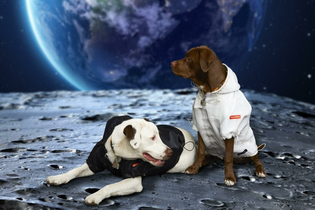NASA dog collection