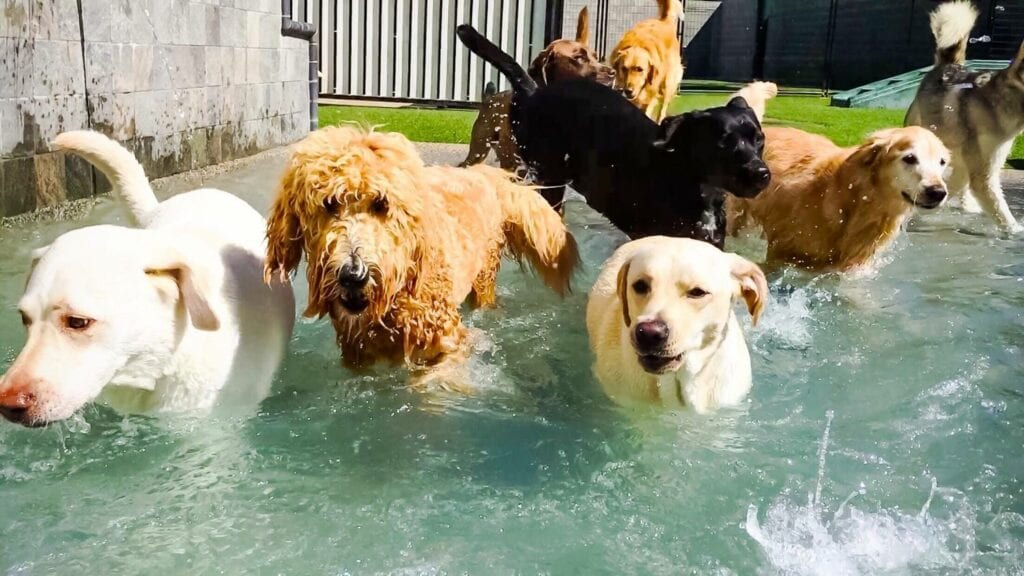 Is Doggie Daycare Right for Your Dog?