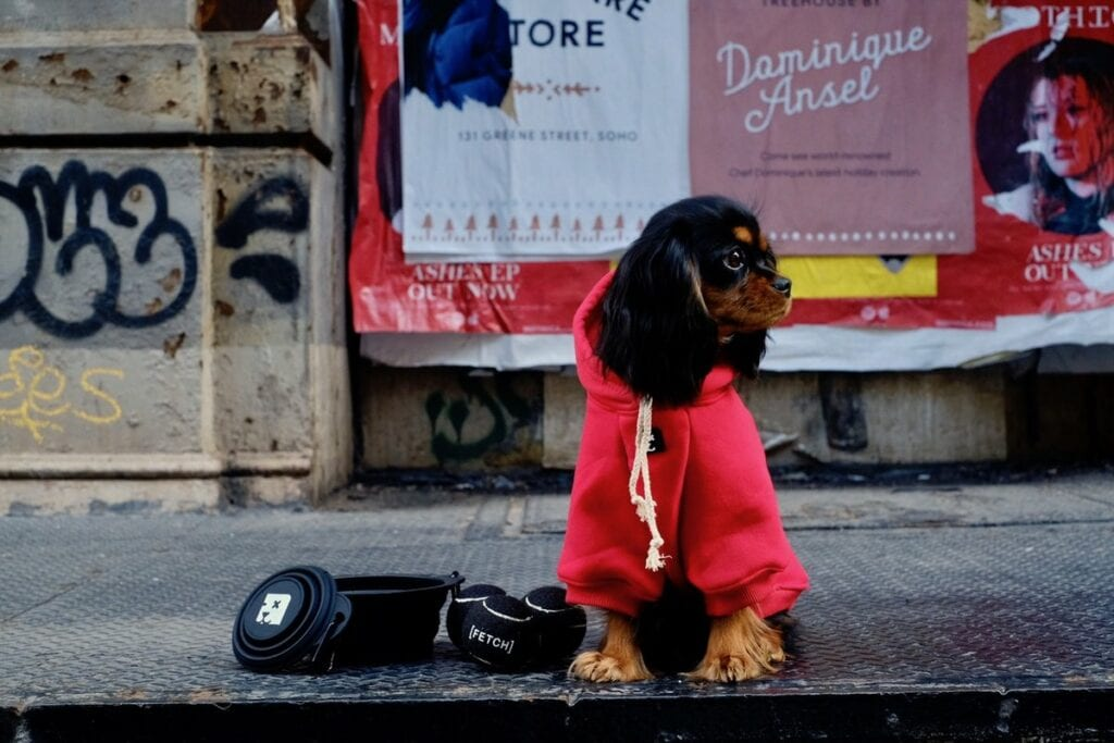 streetwear clothing for dogs