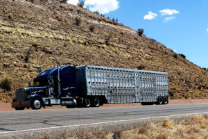 How Much Does Freight Shipping Cost
