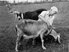 Carl Sandburg and goat
