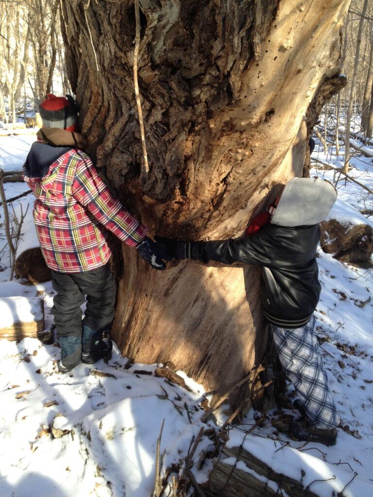 Children hugging Maple Tree