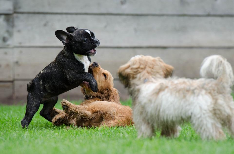 puppy_social