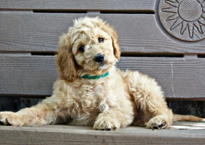 Is CBD Right for Your Dog