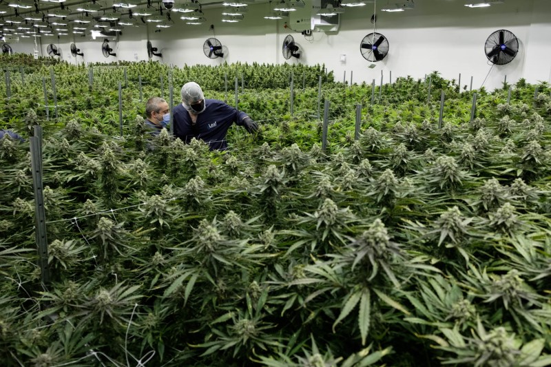 Virginia medical cannabis patients see high prices and long waits