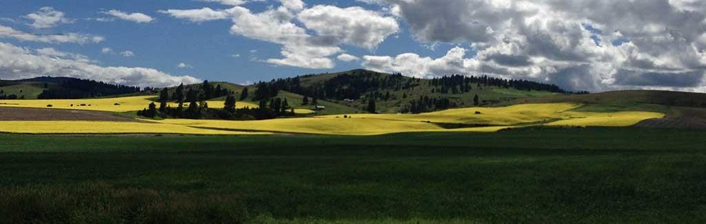 Welcome to Cottonwood Idaho