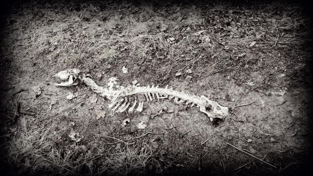 My grandchildren are sure it is a pterodactyl skeleton.