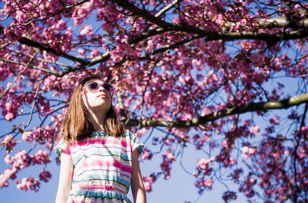 Sunny days and cherry blossoms