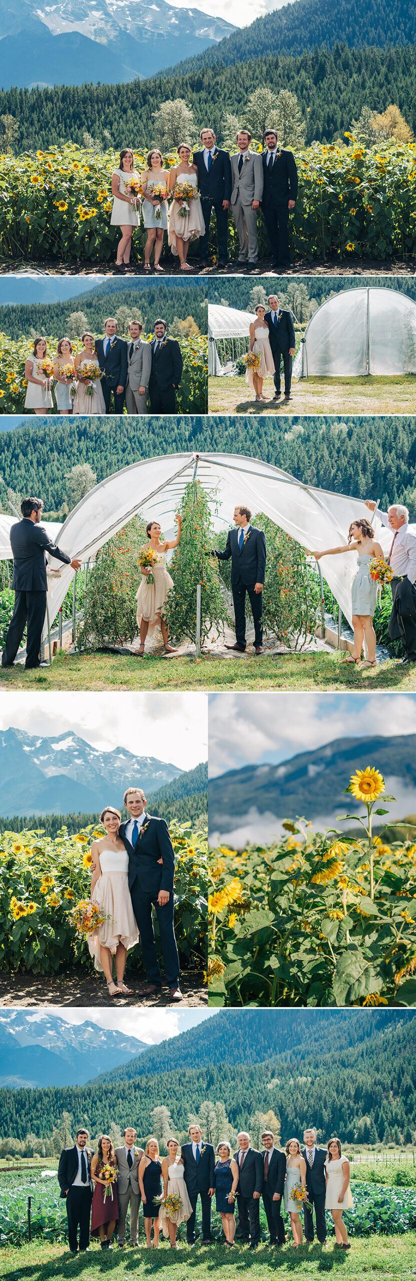 Pemberton BC wedding, farm wedding, plenty wild farms, sunflowers, family portraits