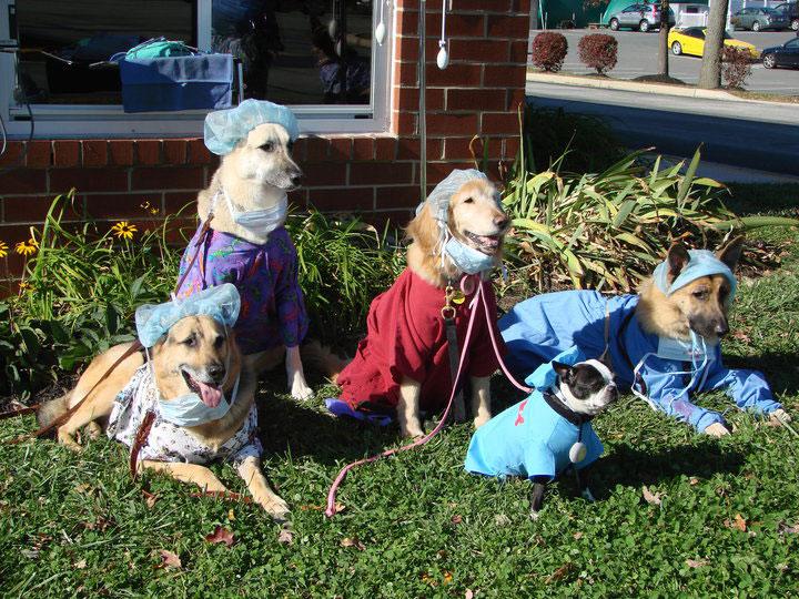 Veterinary Staff Pets