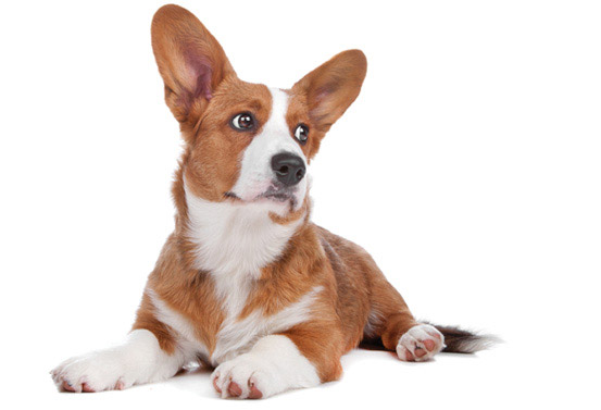 Veterinarian Contact Gambrils, Crofton, Ft. Meade, Odenton, Bowie   Prime Care Animal Hospital