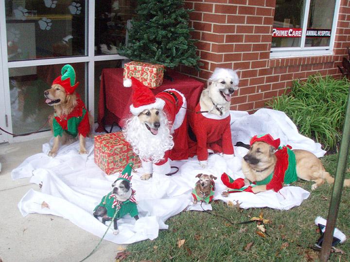 Veterinary Christmas Pet Photos