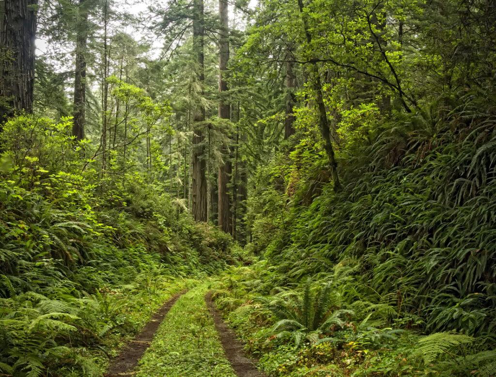 Old Redwood Highway