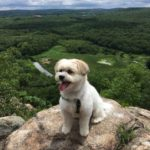 Frida's favorite activity is hiking with her family.