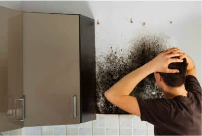 Mold Removal Services Near Me