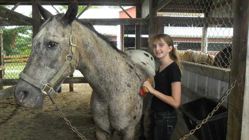 br-horse-grooming-68