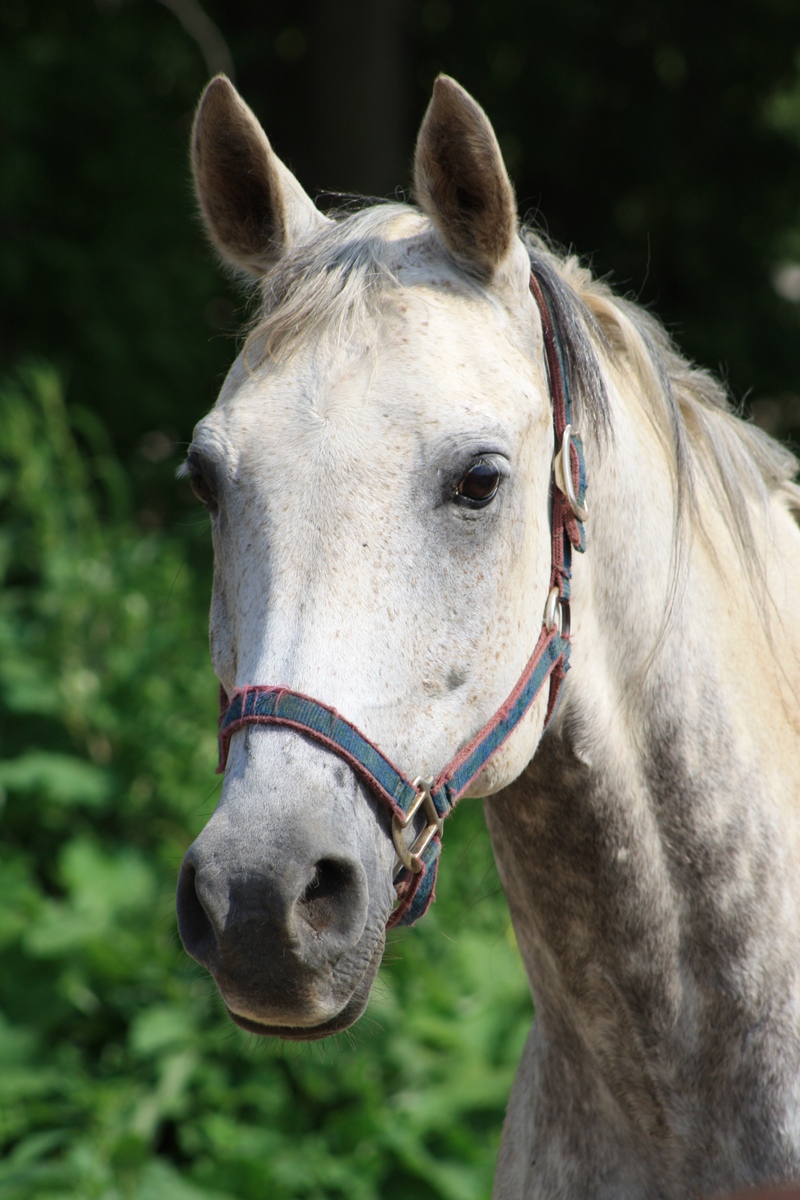 br-horse-head-00