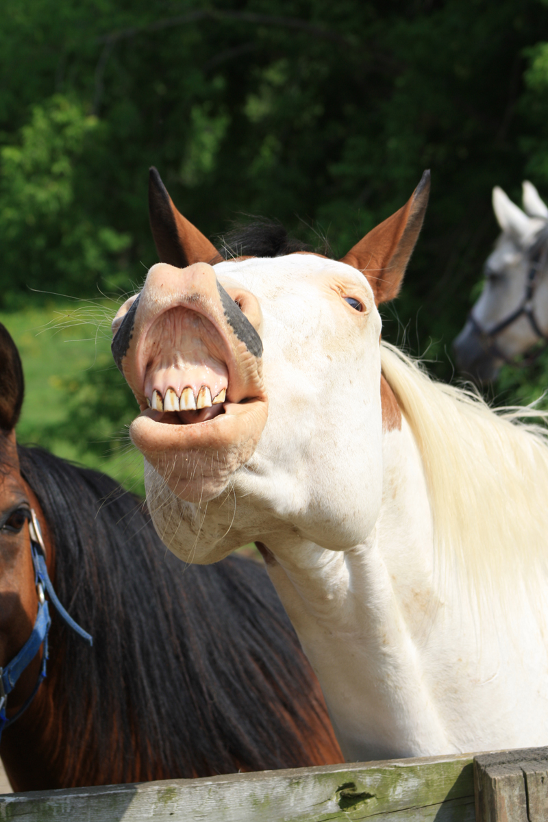 br-horse-head-03