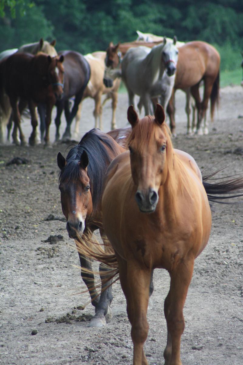 br-horse-herd-02
