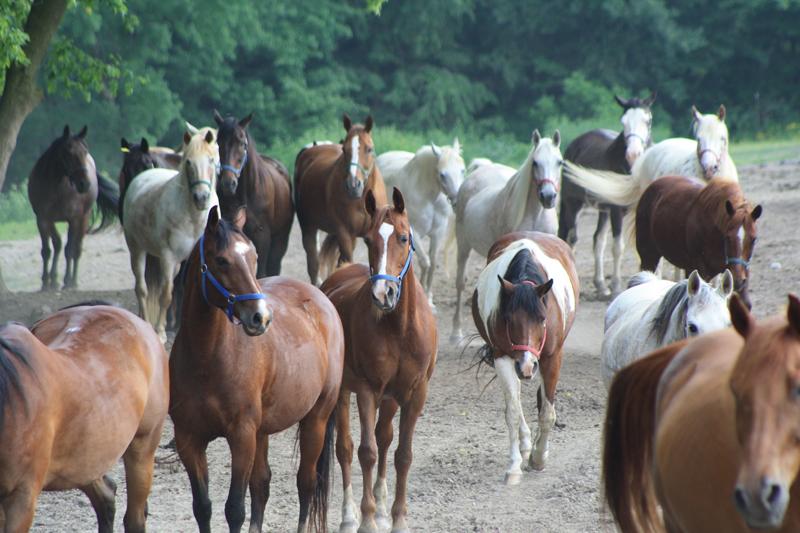 br-horses
